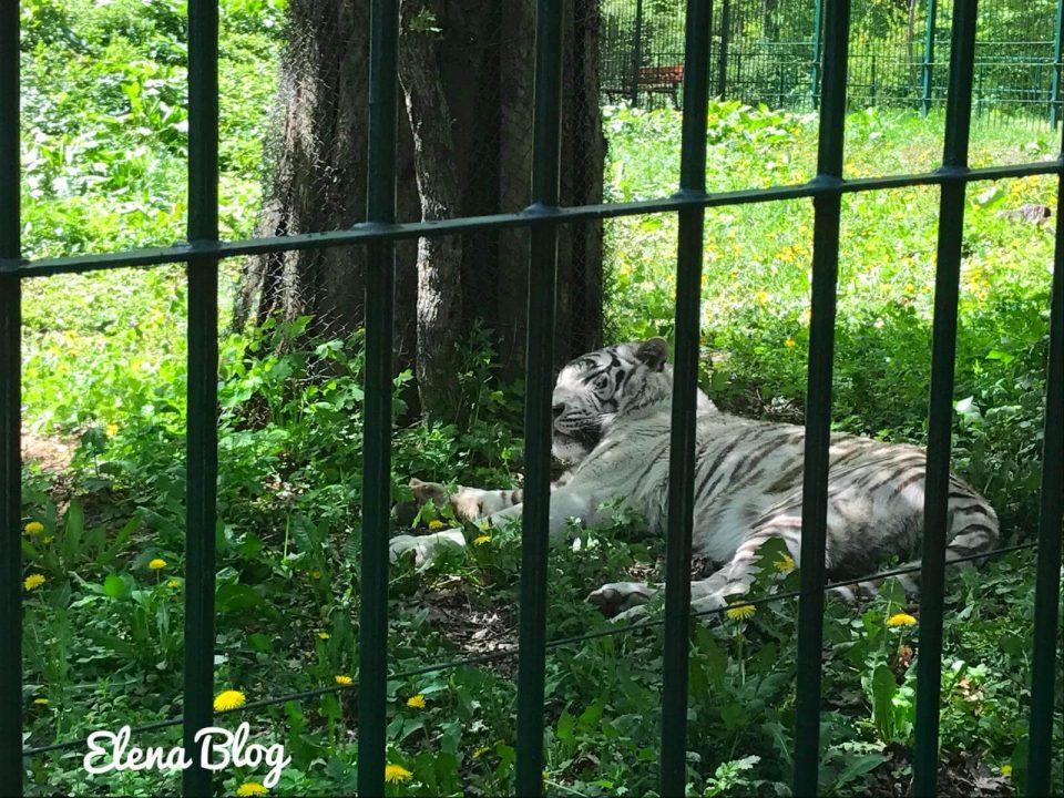 gradina zoo sibiu